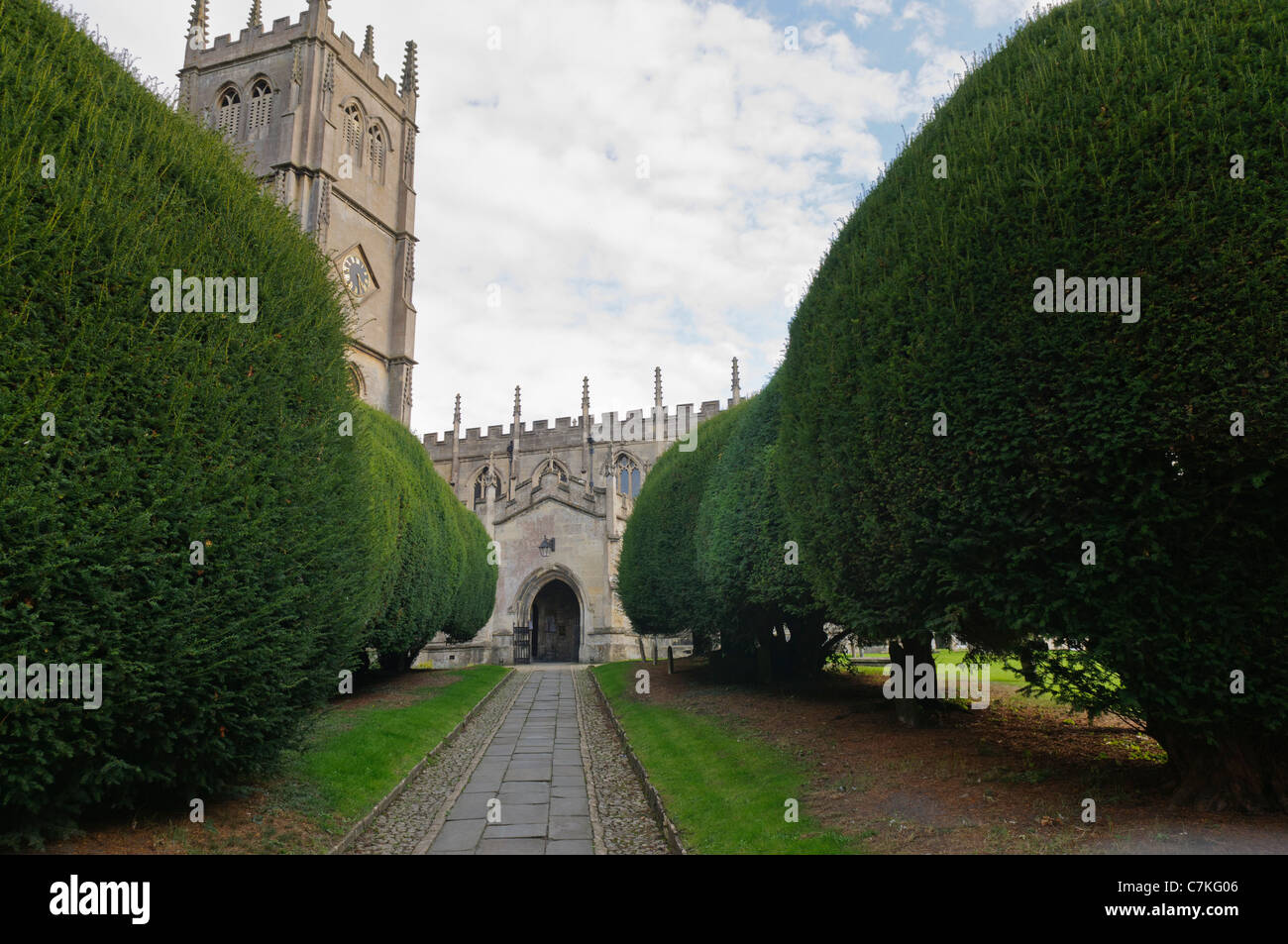 Yew tree lined path to St Mary's Church, Calne, Wiltshire. - Stock Image