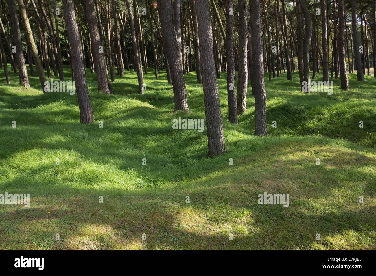 Thousands of trees were planted in the scarred land to commemorate the WW1 missing dead at Vimy Ridge Pas de Calais - Stock Image
