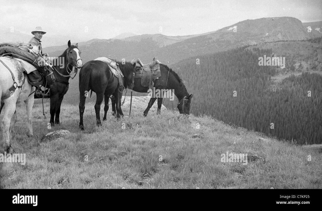 man sittling on horse with horses California Sierra Nevada mountains 1930s 1940s horseback high sierras camping - Stock Image