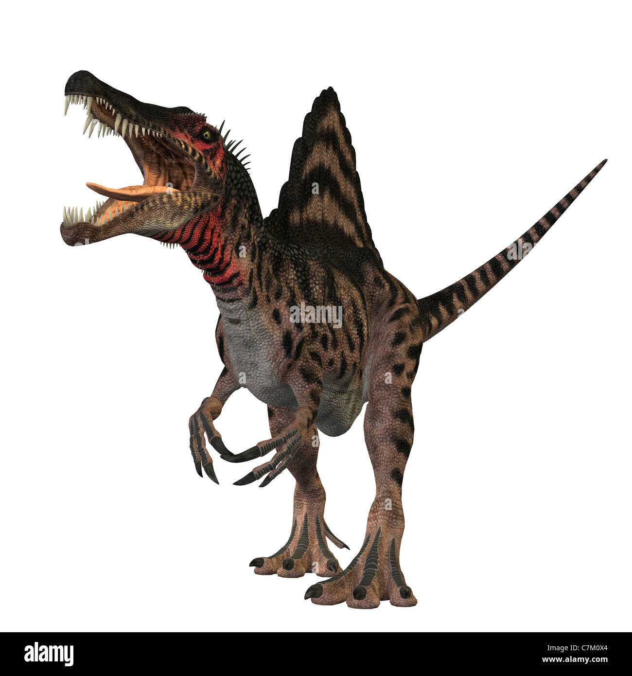 The Spinosaurus dinosaur was a huge carnivore of the Cretaceous Period of Earths history. - Stock Image