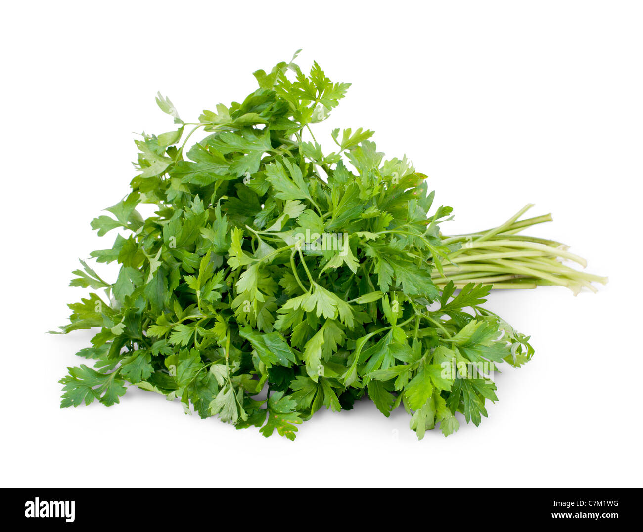 Bunch of parsley isolated on white background - Stock Image
