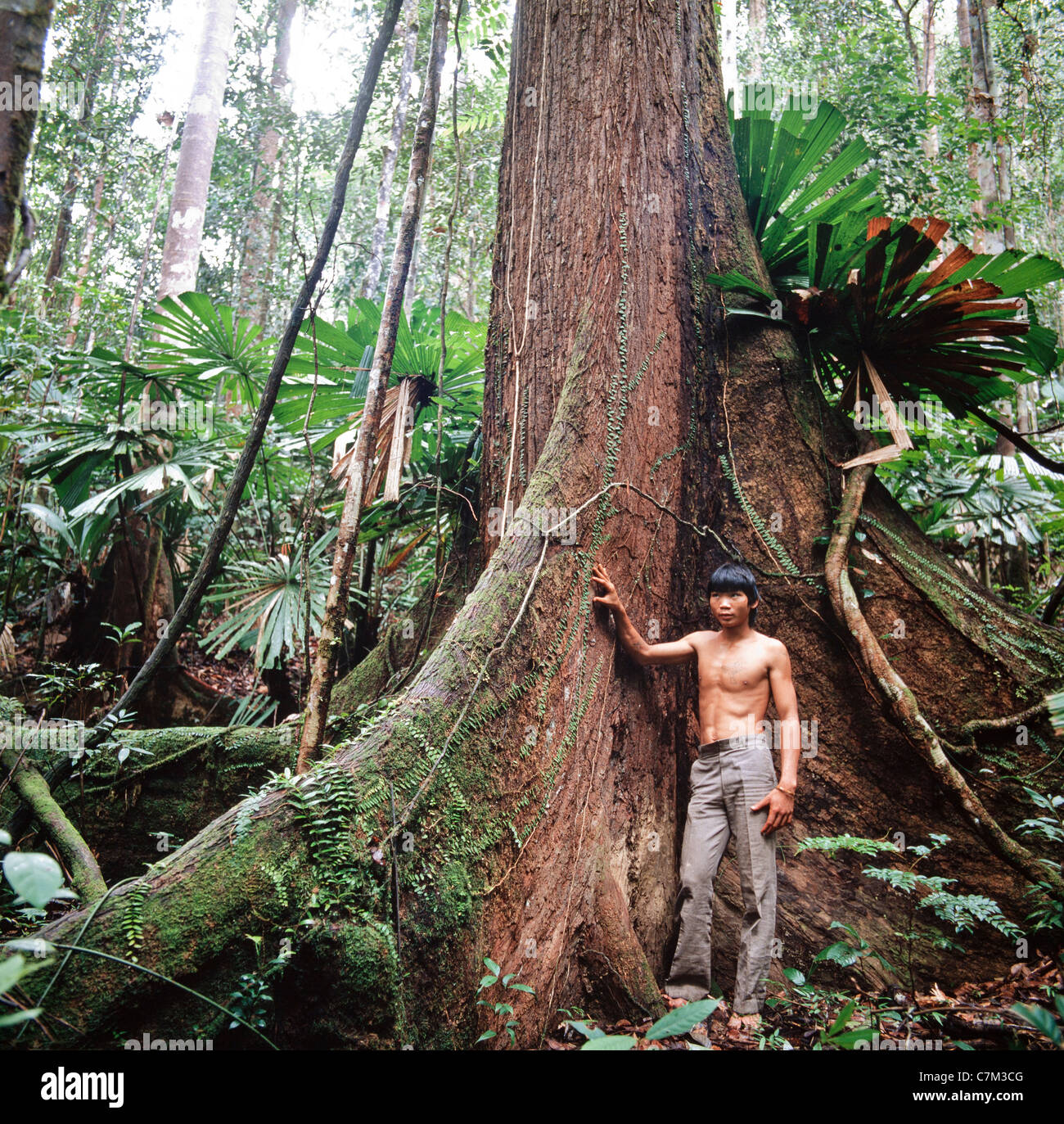 Penan native boy standing by a large buttress rooted hardwood tree, Mulu National Park, Sarawak, Borneo, East Malaysia Stock Photo