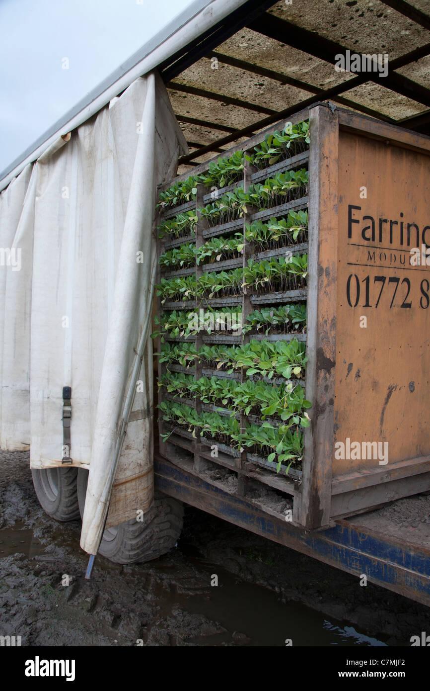 Module Plants Farm Container On Farmland Southport Merseyside Uk