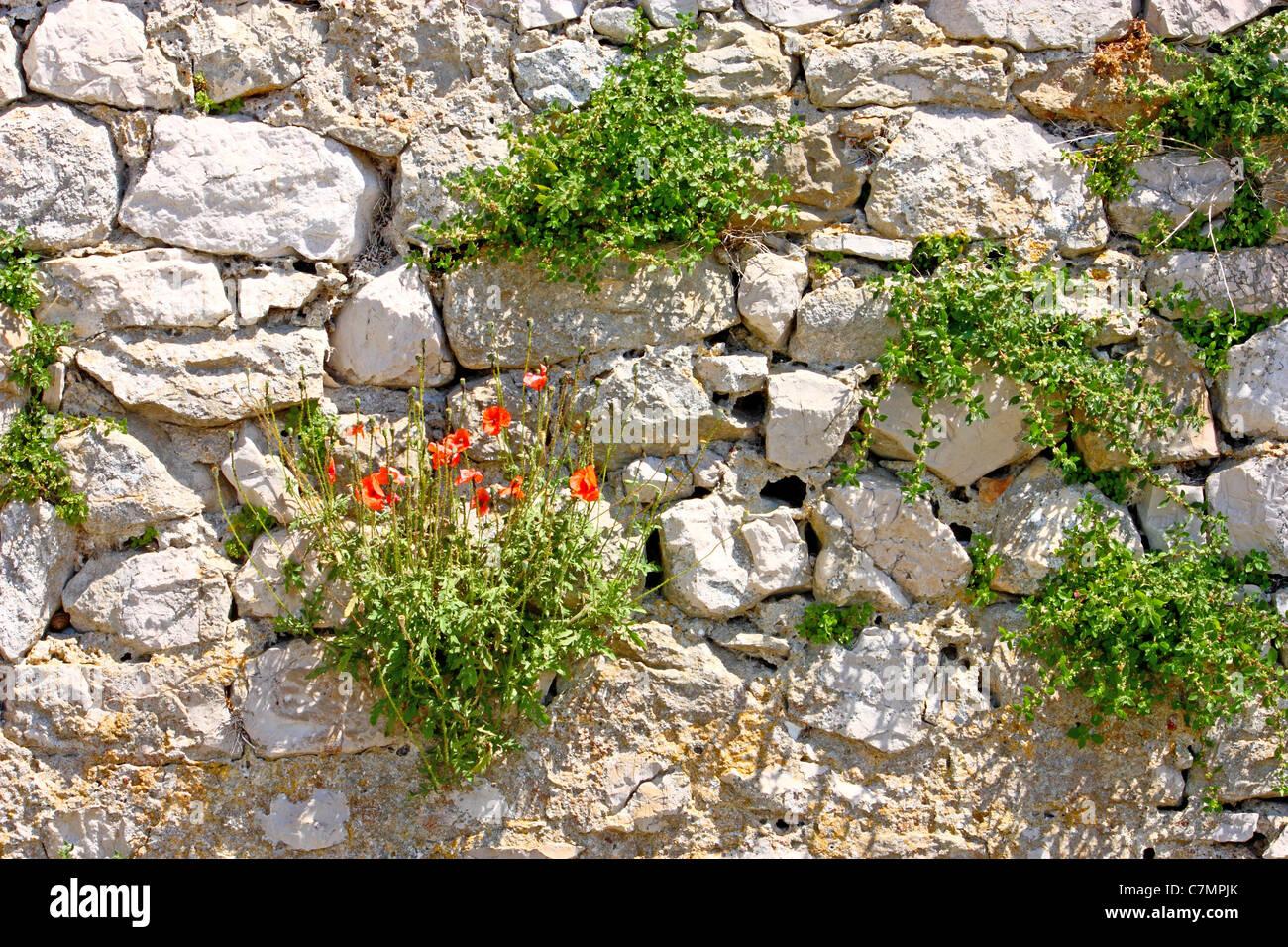 Plante Sur Les Murs overgrown wall flower stock photos & overgrown wall flower