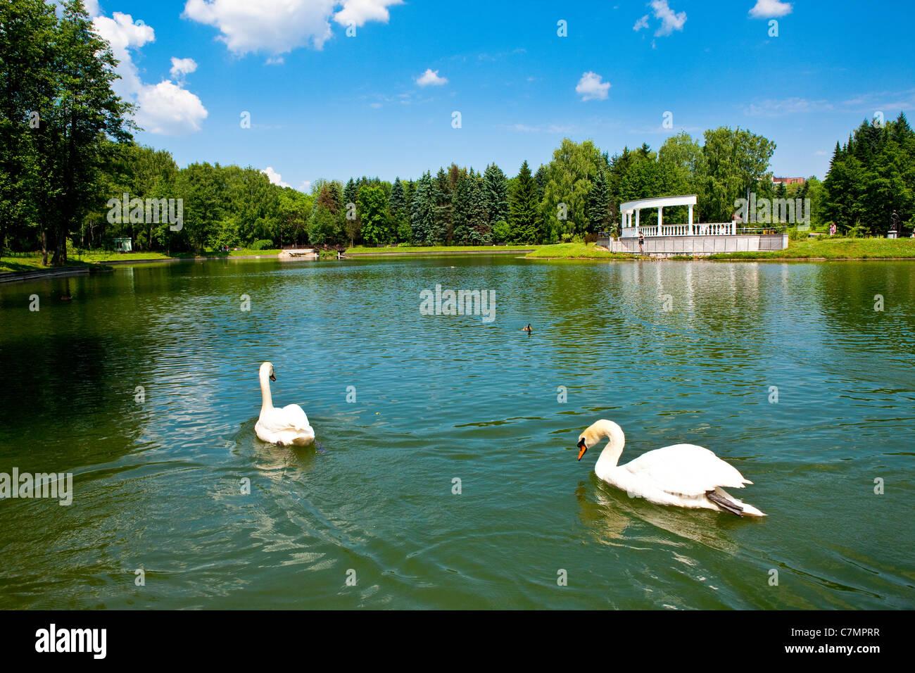 Swans at the Minsk Botanical Garden, Belarus - Stock Image