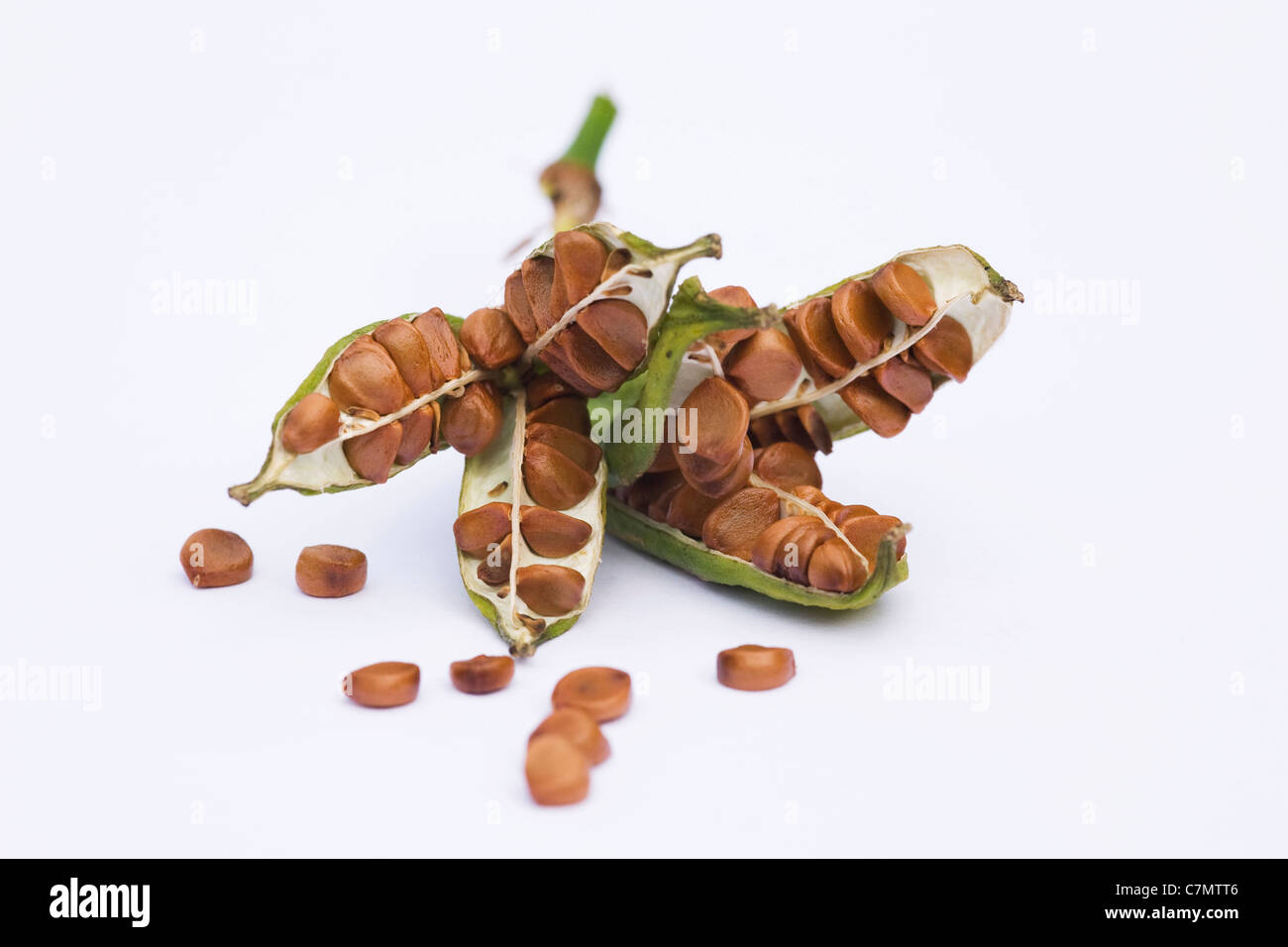 Iris foetidissima. Ripe seeds spilling from a seed pod on a white background. - Stock Image