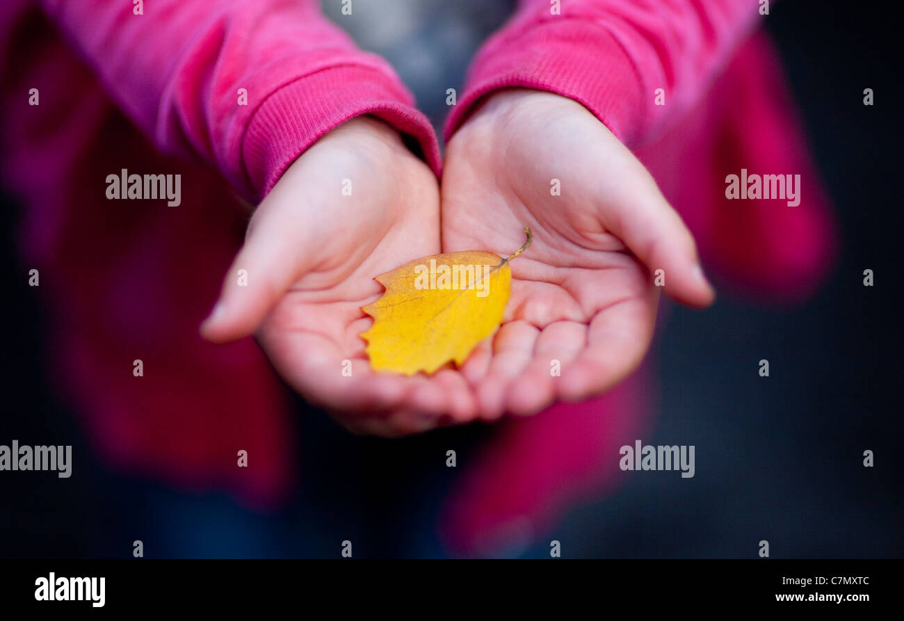 A young girl cupping a yellow autumn leaf in her hands. Stock Photo