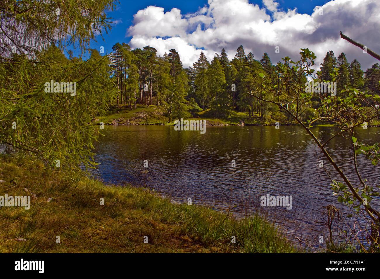 Tarn Howes nr Keswick Lake District Cumbria UK - Stock Image