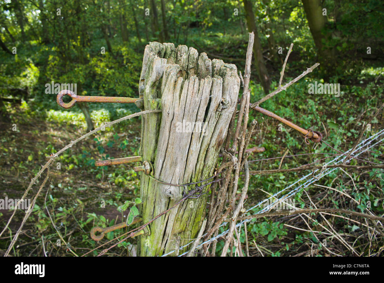Fence post defense on the edge of Castle Hills Wood, Gainsborough, Lincolnshire, - Stock Image