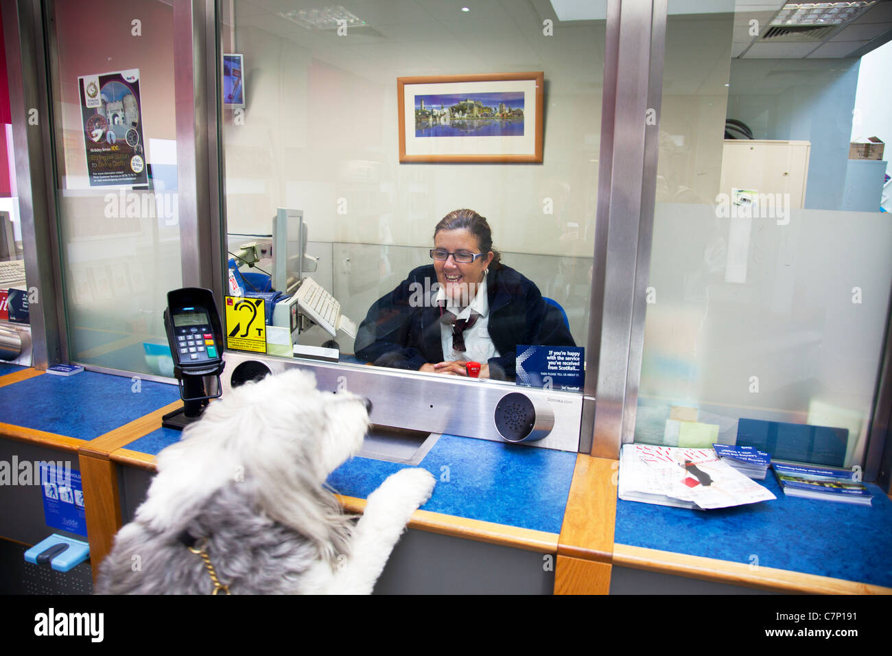 Bearded collie (movement on dog) buying, purchasing ticket at Stirling rail station lady smiling at pet before journey - Stock Image