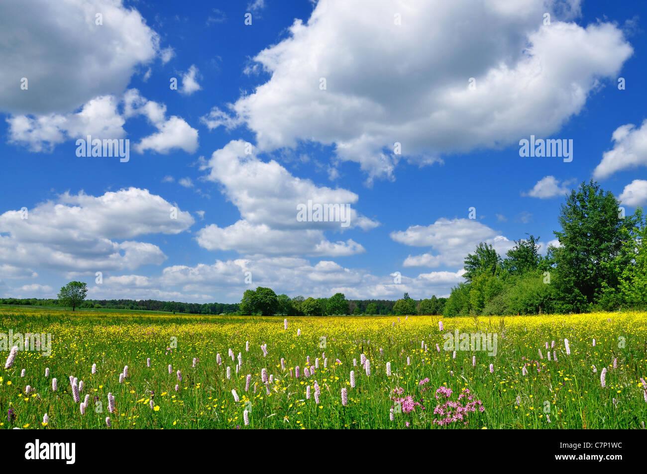 Spring Landscape - Stock Image