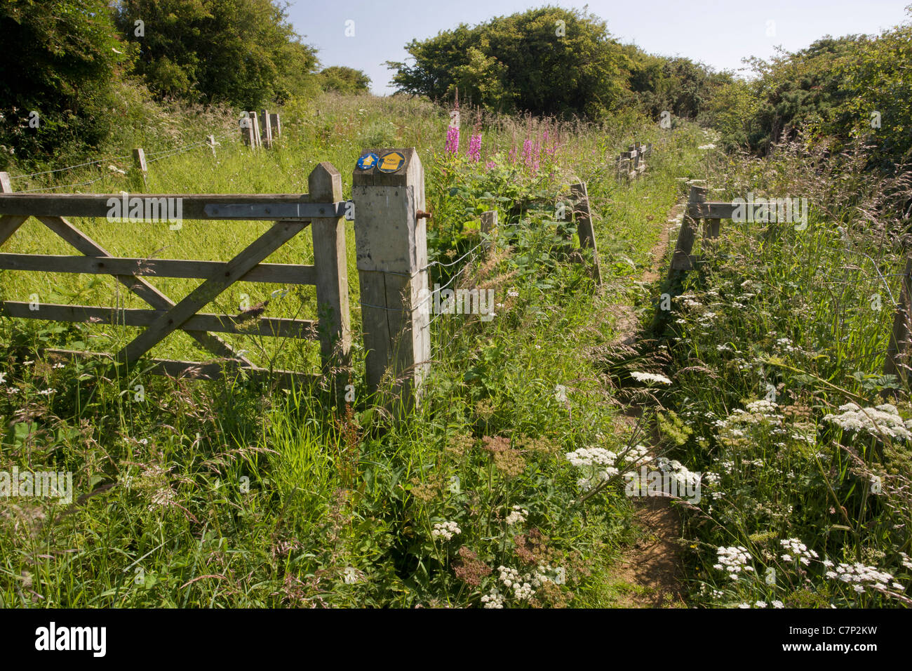 Footpath through scrub area at Cross Gill, or North Crimdon Meadow. Magnesian limestone site on the north Durham - Stock Image