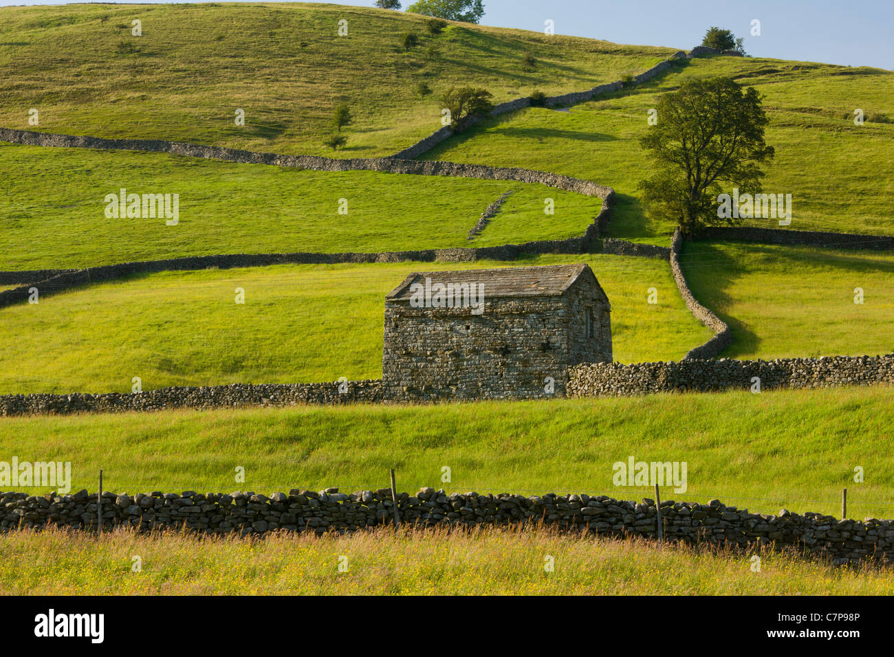 Barns and stone walls near Muker, Swaledale; Yorkshire Dales National Park; North Yorkshire. - Stock Image