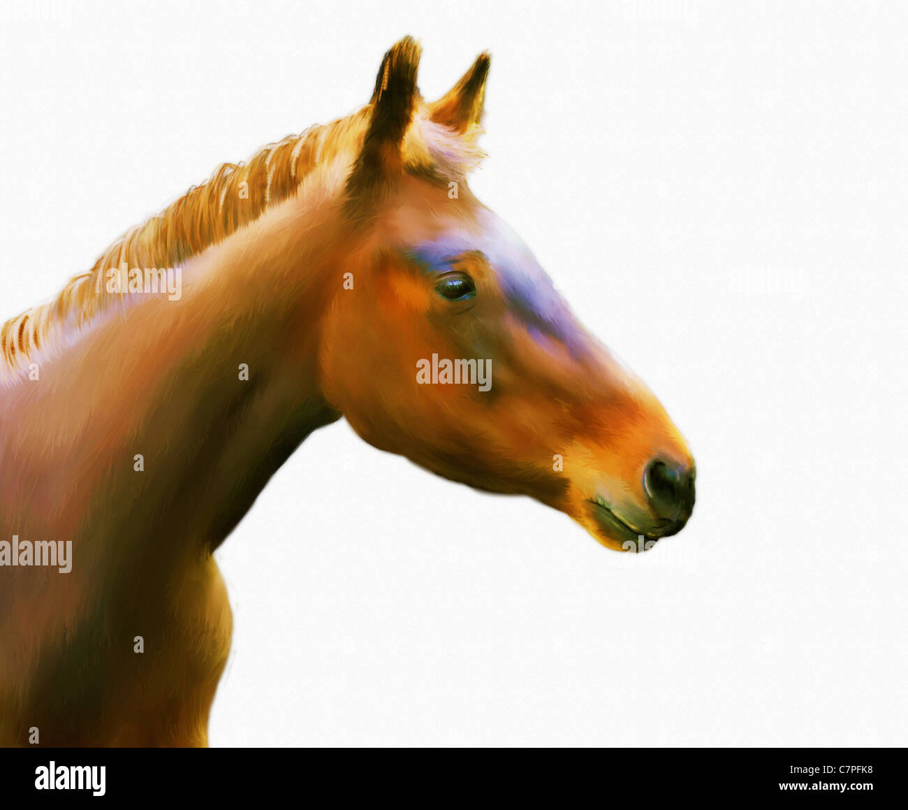 Acrylic Painting Of A Horse Head On White Paper Textured Background Stock Photo Alamy