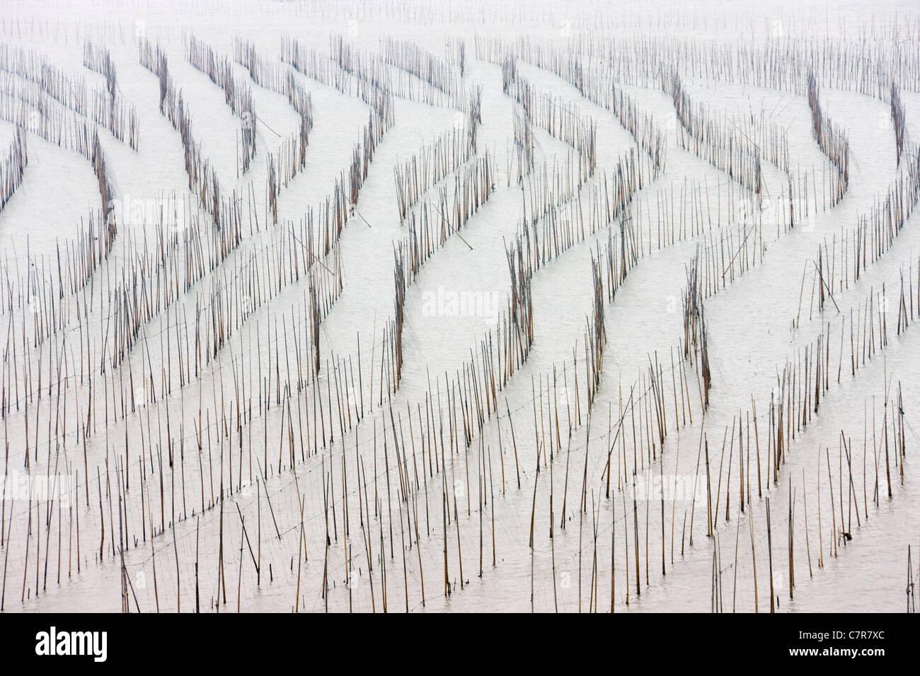 Bamboo sticks for drying seaweed, East China Sea, Xiapu, Fujian, China - Stock Image