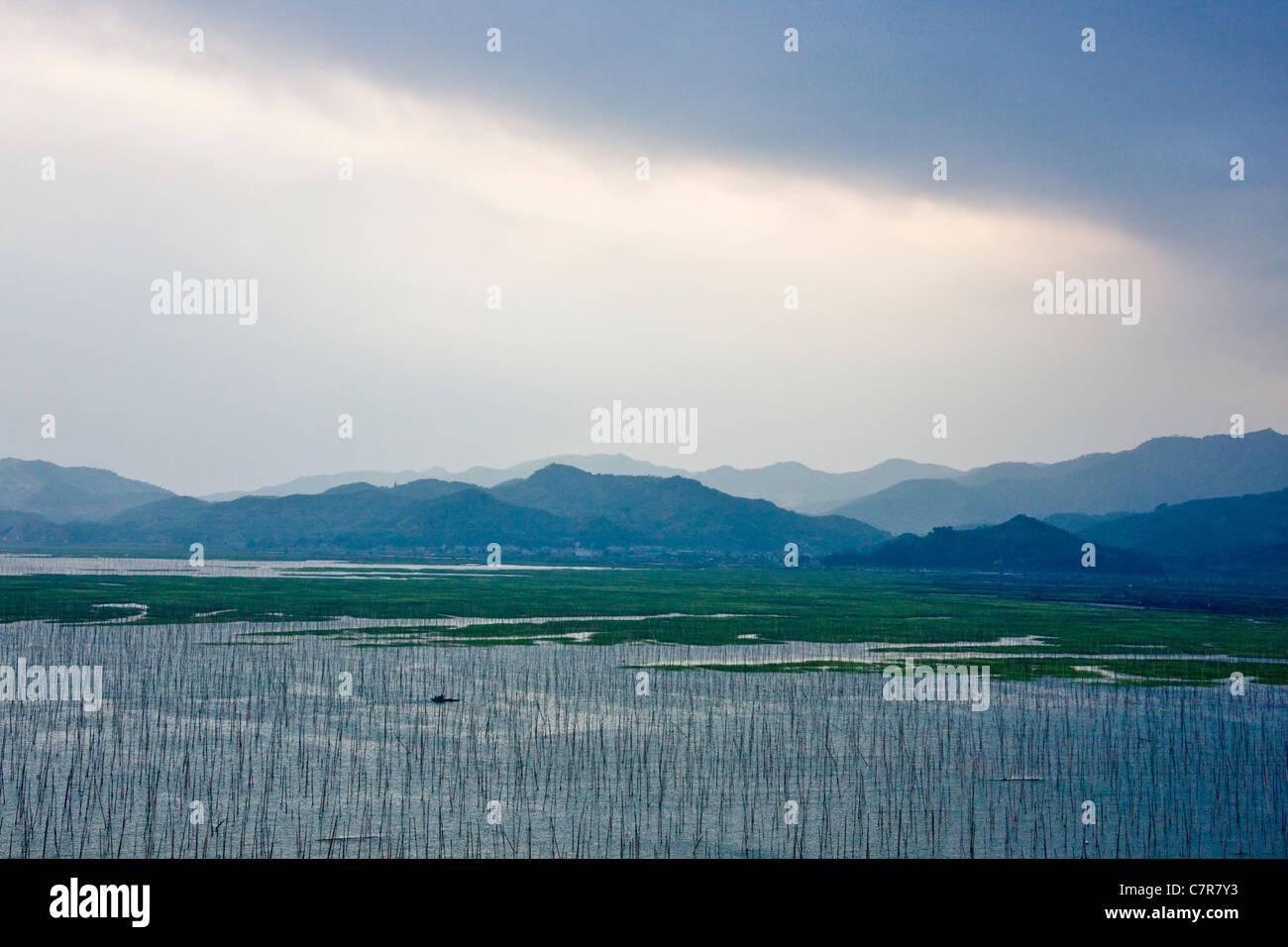 Seaweed farm in the ocean, East China Sea, Xiapu, Fujian, China - Stock Image