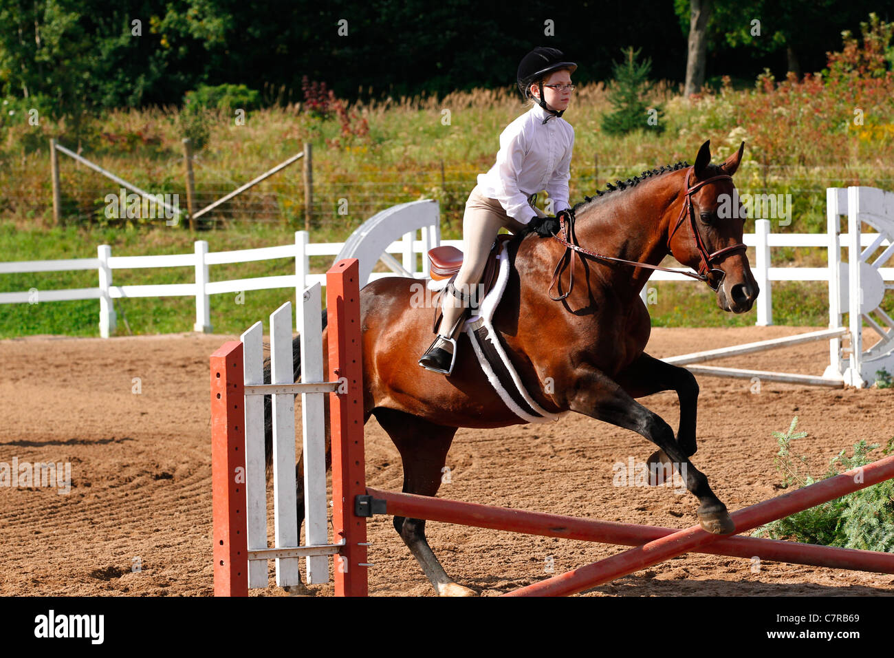 Young Rider Jumps A Fence At A Competition On Her Bay Hunter Jumper Stock Photo Alamy