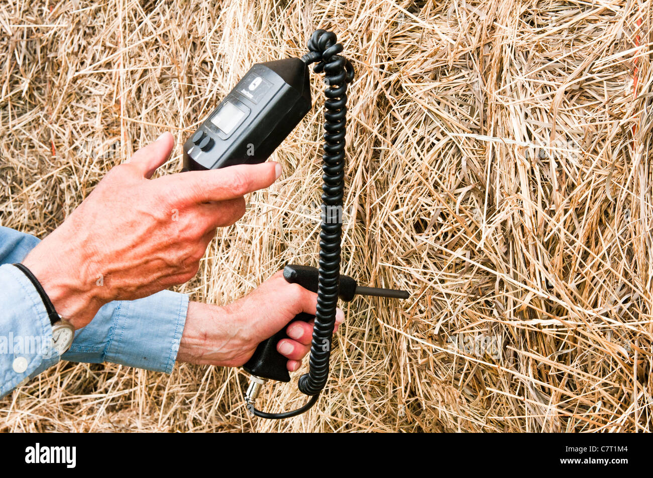 A farmer uses an instrument to test an alfalfa bale for moisture content and temperature. - Stock Image