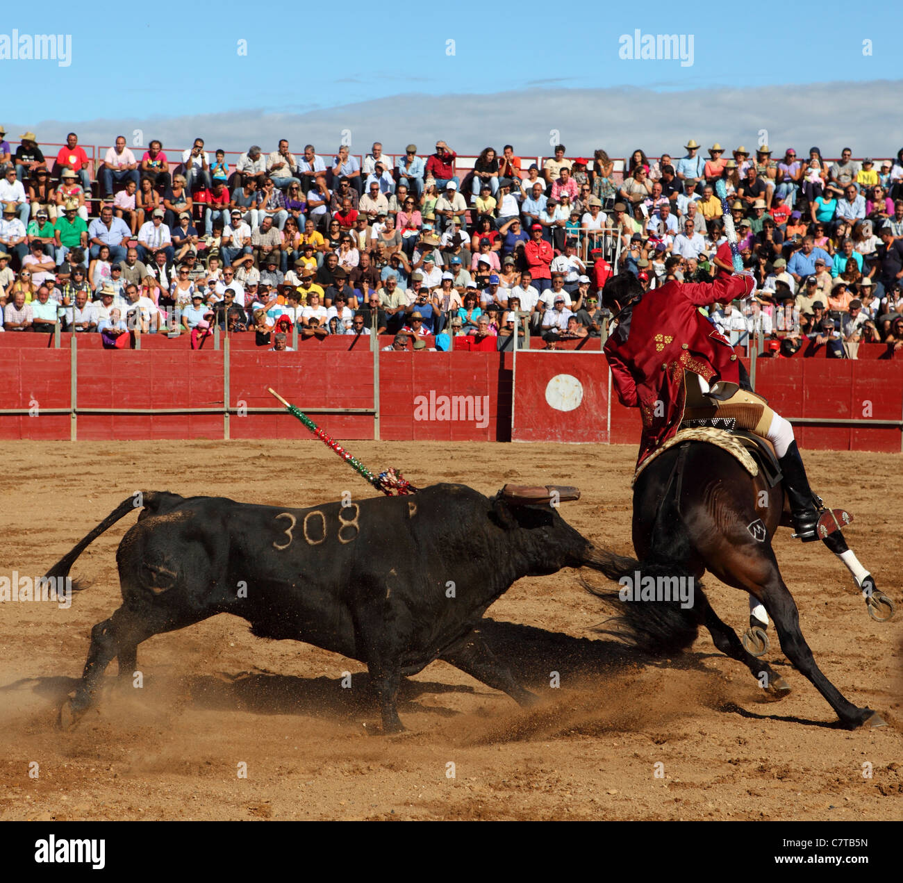 Luis Rouxinol in action during a bullfight in Mafra, District of Lisbon, Portugal. - Stock Image