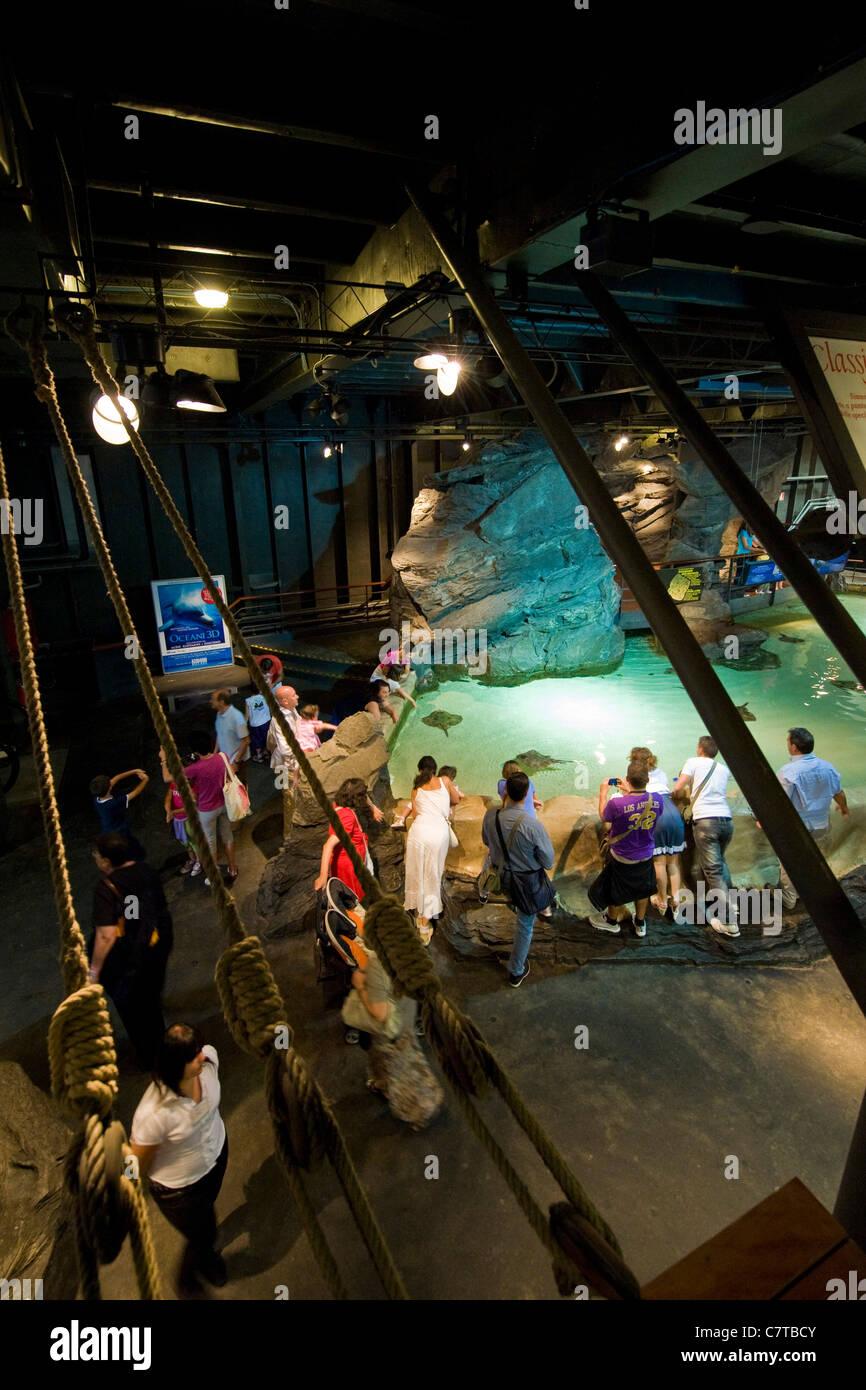 Italy, Liguria, Aquarium of Genoa, people looking at sea turtles Stock Photo