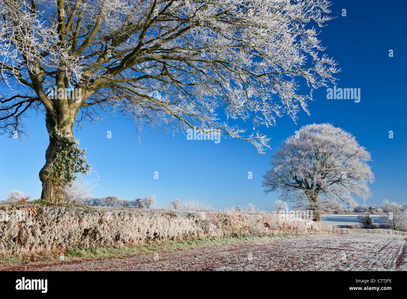 Hoar frosted farmland and trees, Bow, Mid Devon, England. Winter (December) 2010. - Stock Image