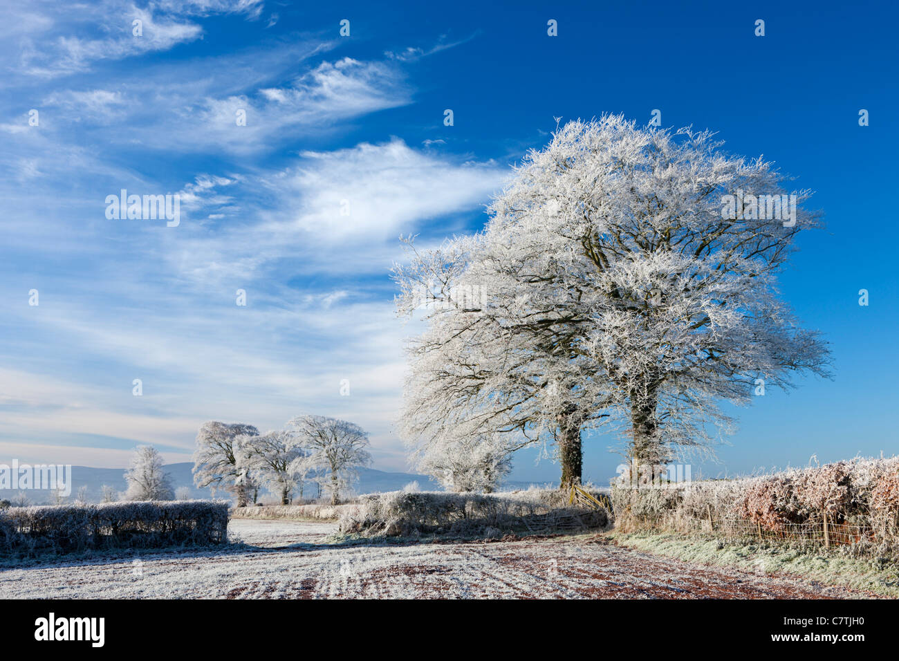 Hoar frosted farmland and trees in winter time, Bow, Mid Devon, England. Winter (December) 2010. - Stock Image