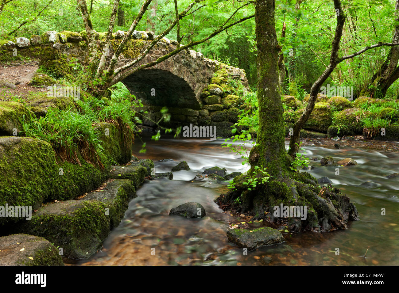 Medieval Hisley Bridge spanning the River Bovey in Hisley Wood, Dartmoor, Devon, England. Summer (July) 2011. - Stock Image