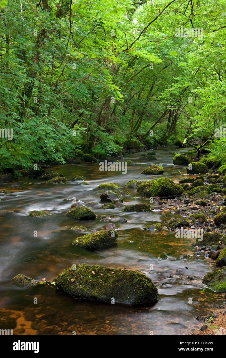 River Bovey running through Lustleigh Cleave, Dartmoor, Devon, England. Summer (July) 2011. - Stock Image