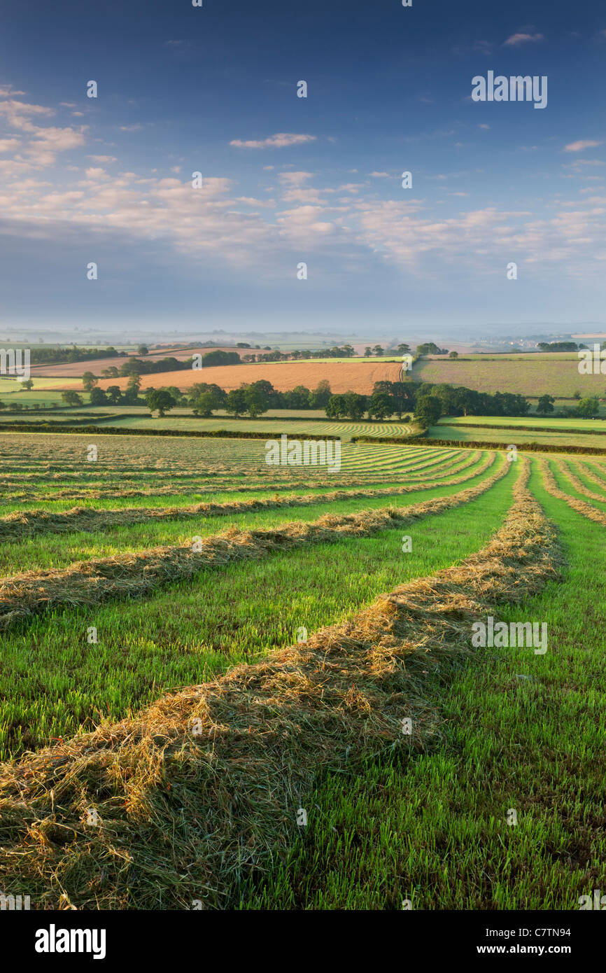 Freshly cut hay meadow, Morchard Bishop, Devon, England. Summer (July) 2011. - Stock Image
