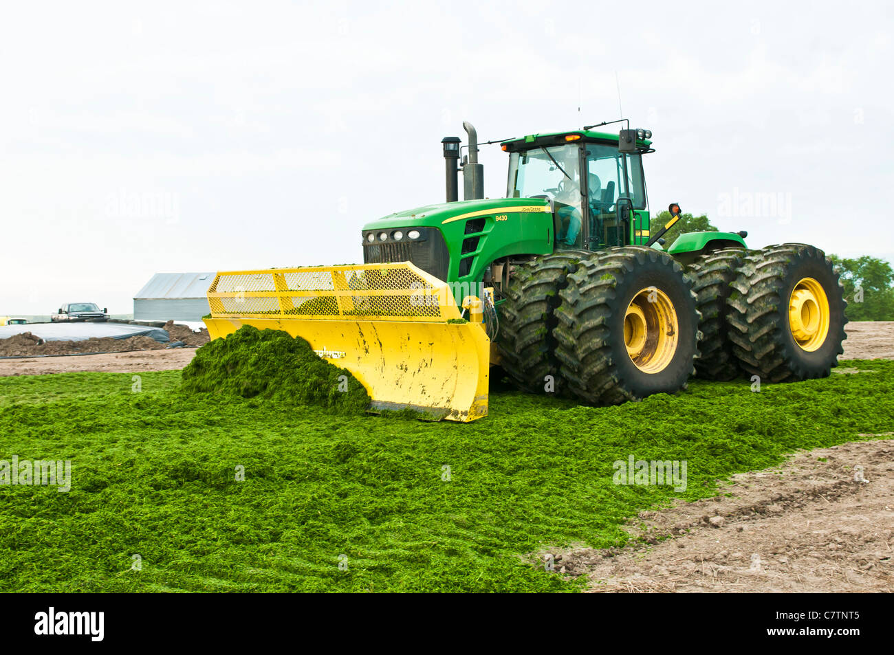 Freshly cut alfalfa silage is spread into rows with a tractor and blade on a farm in South Dakota. - Stock Image
