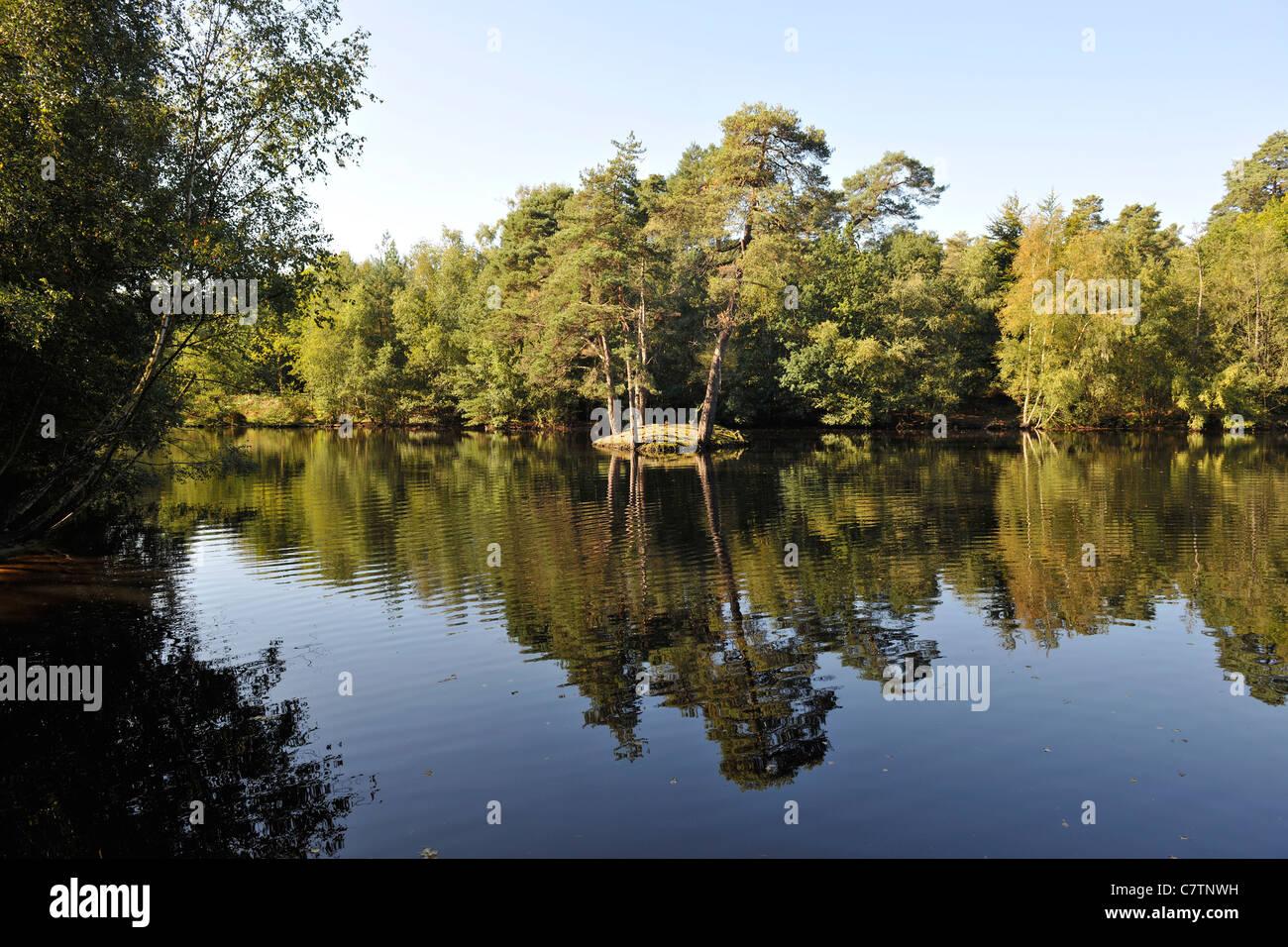 Heath Pool, Simon's Wood, Crowthorne -1 - Stock Image