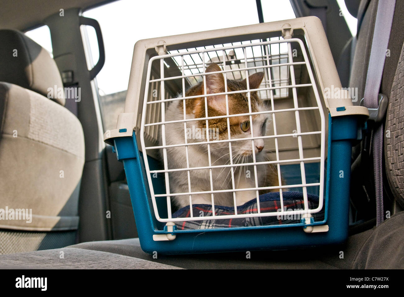 Cat in car inside carrying box - Stock Image