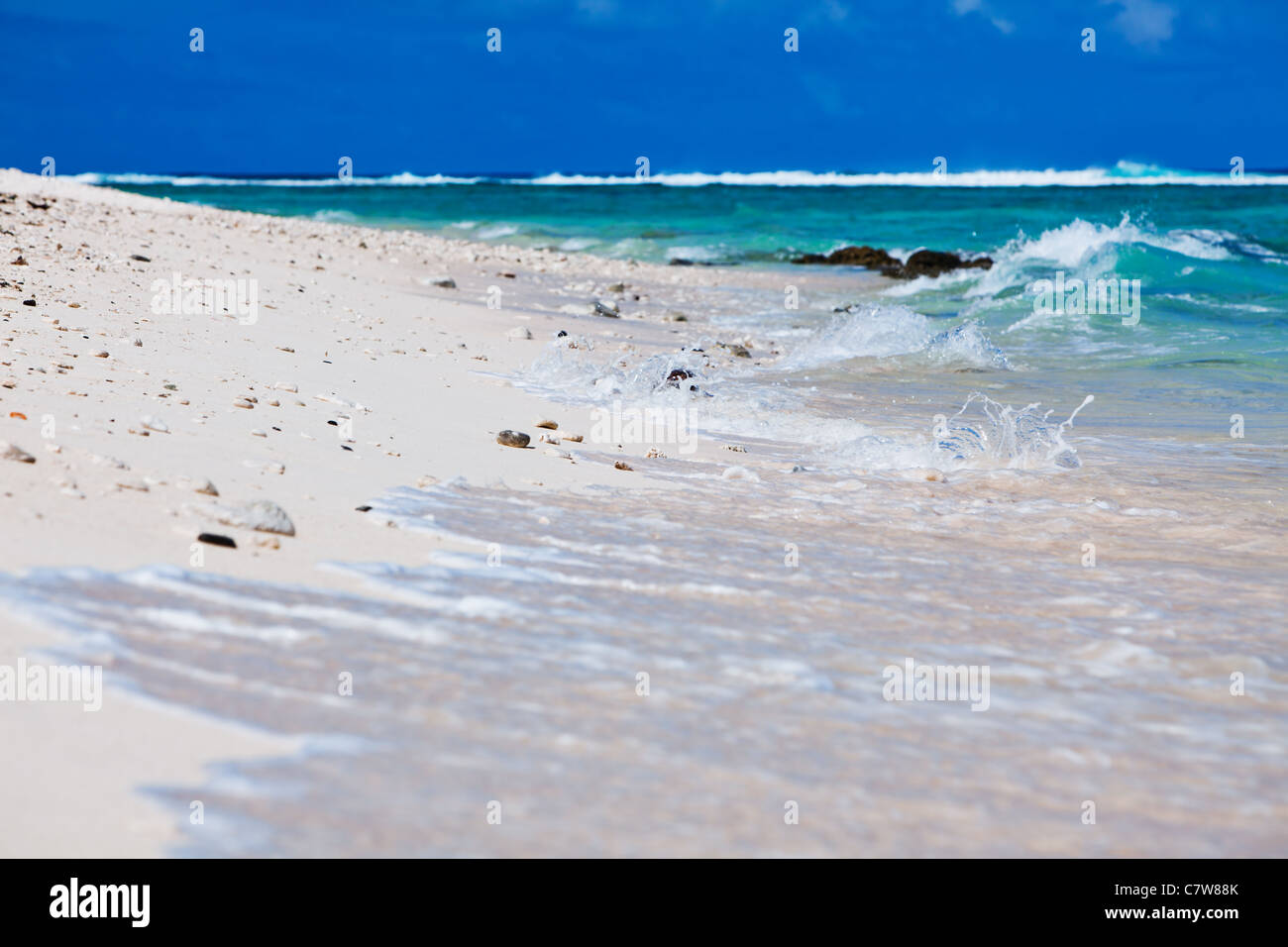 bb174bdd9 Coral Pieces Stock Photos   Coral Pieces Stock Images - Alamy