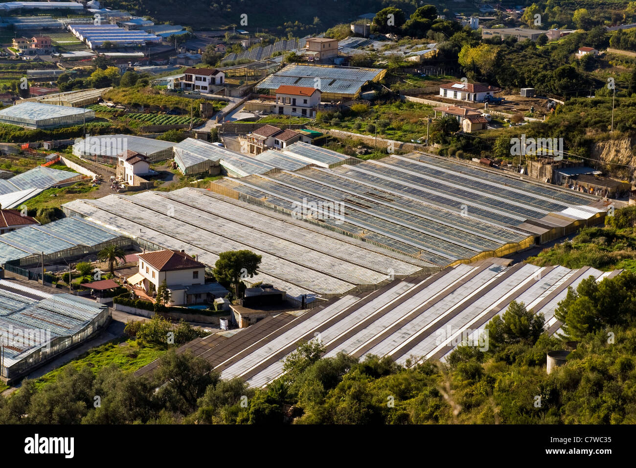 Italy, Liguria, Sanremo, flower greenhouses - Stock Image