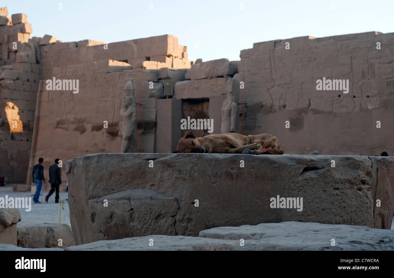A dog sleeping in the Karnak temple, Luxor, Egypt - Stock Image