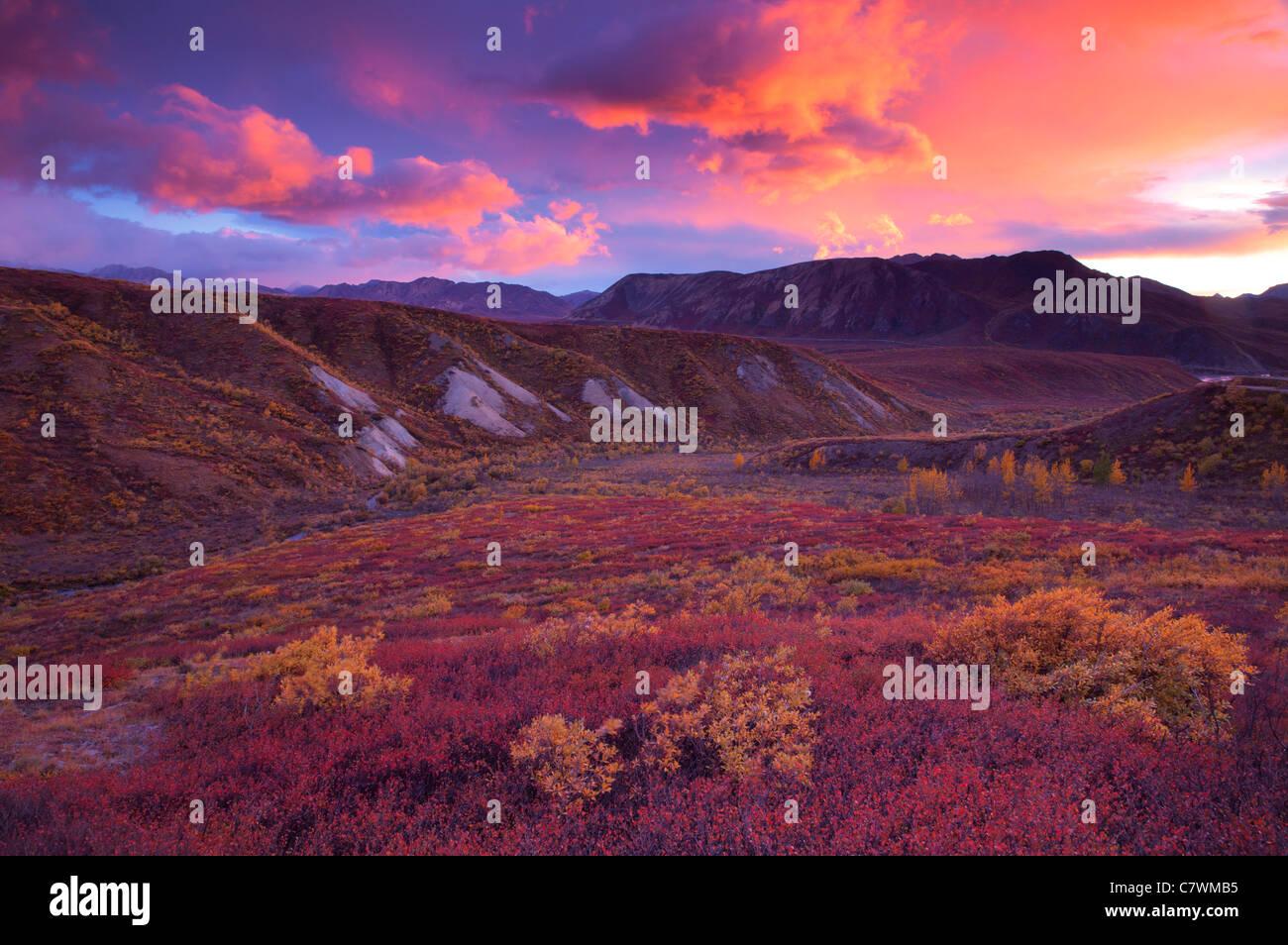 Sunset in Sable Pass, Denali National Park, Alaska. - Stock Image
