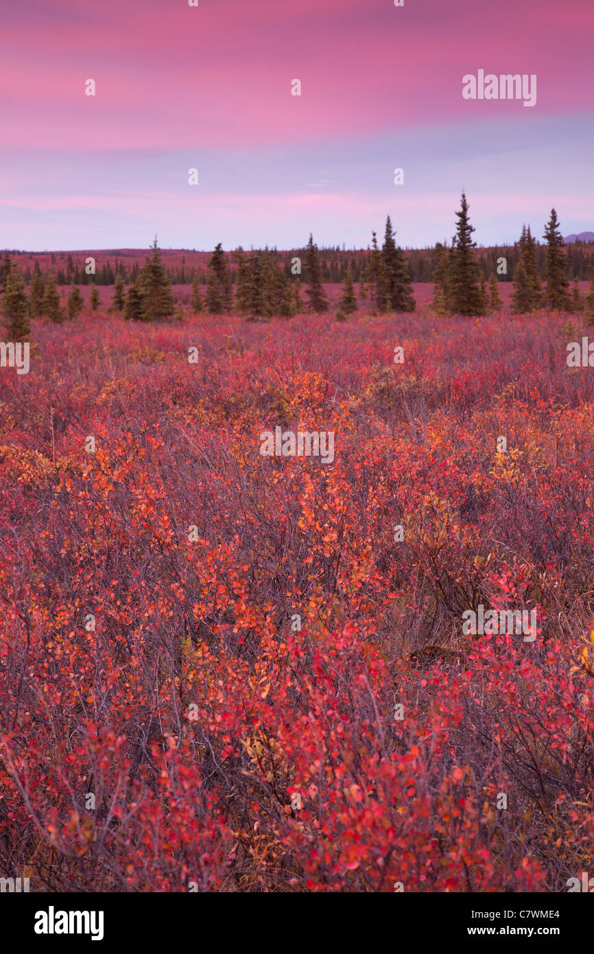 Sunset at Teklanika, Denali National Park, Alaska. - Stock Image