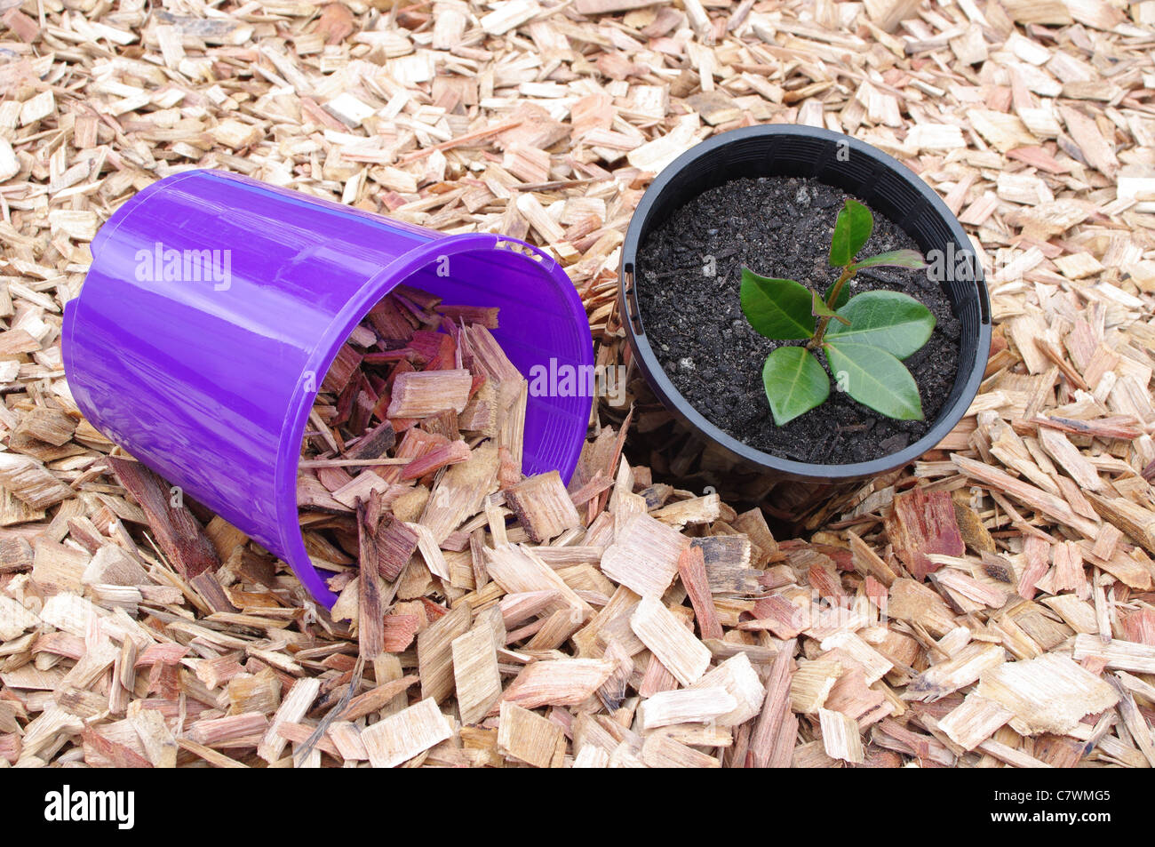 potted plant with pot and mulch Stock Photo