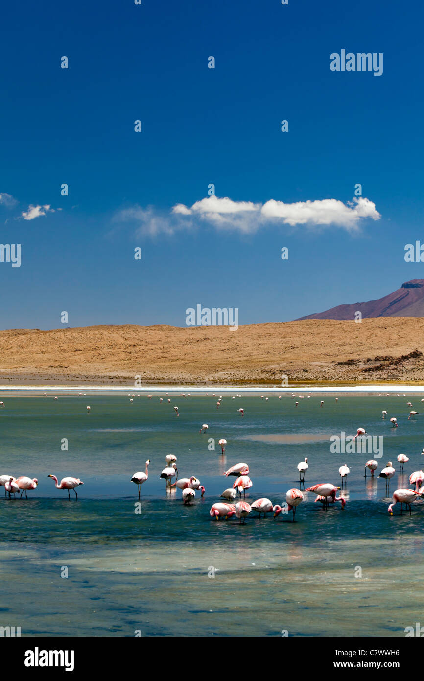 The stunning scenery between San Pedro de Quemez and Ojo de Perdiz, Bolivia - Stock Image
