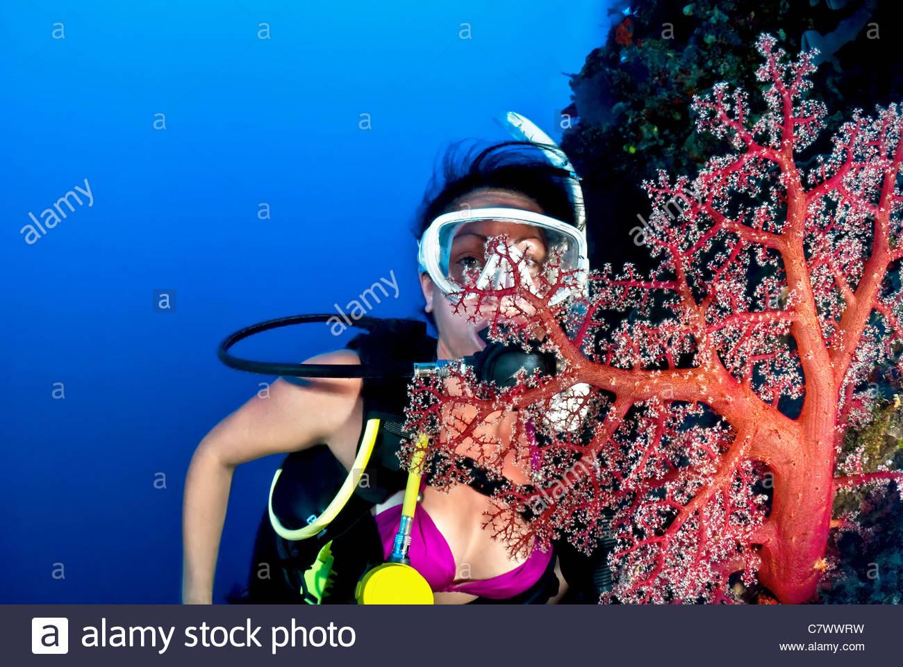 Woman scuba diving - Stock Image