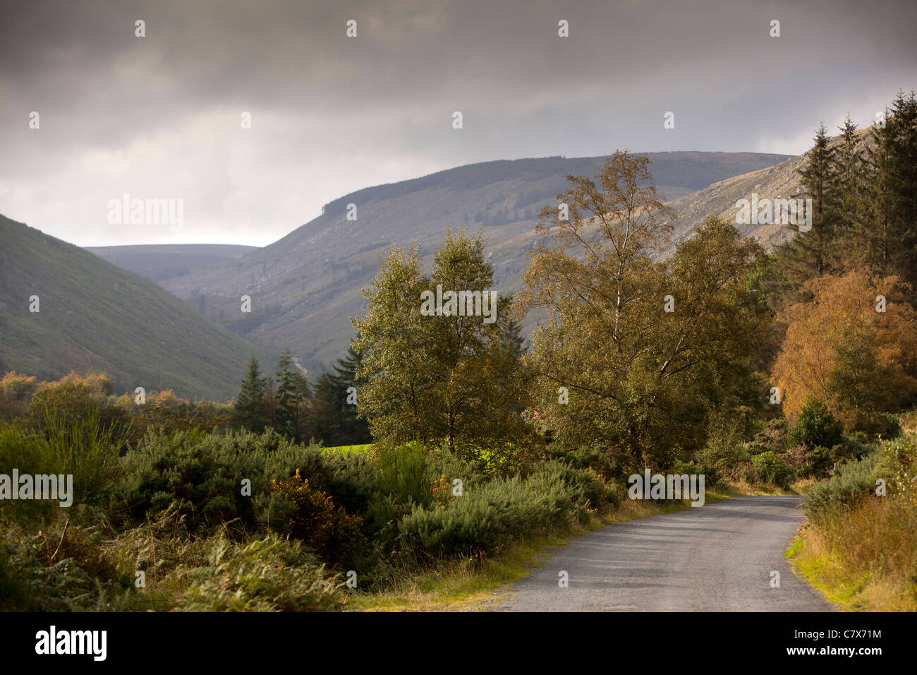 Wicklow Forest Stock Photos & Wicklow Forest Stock Images - Alamy