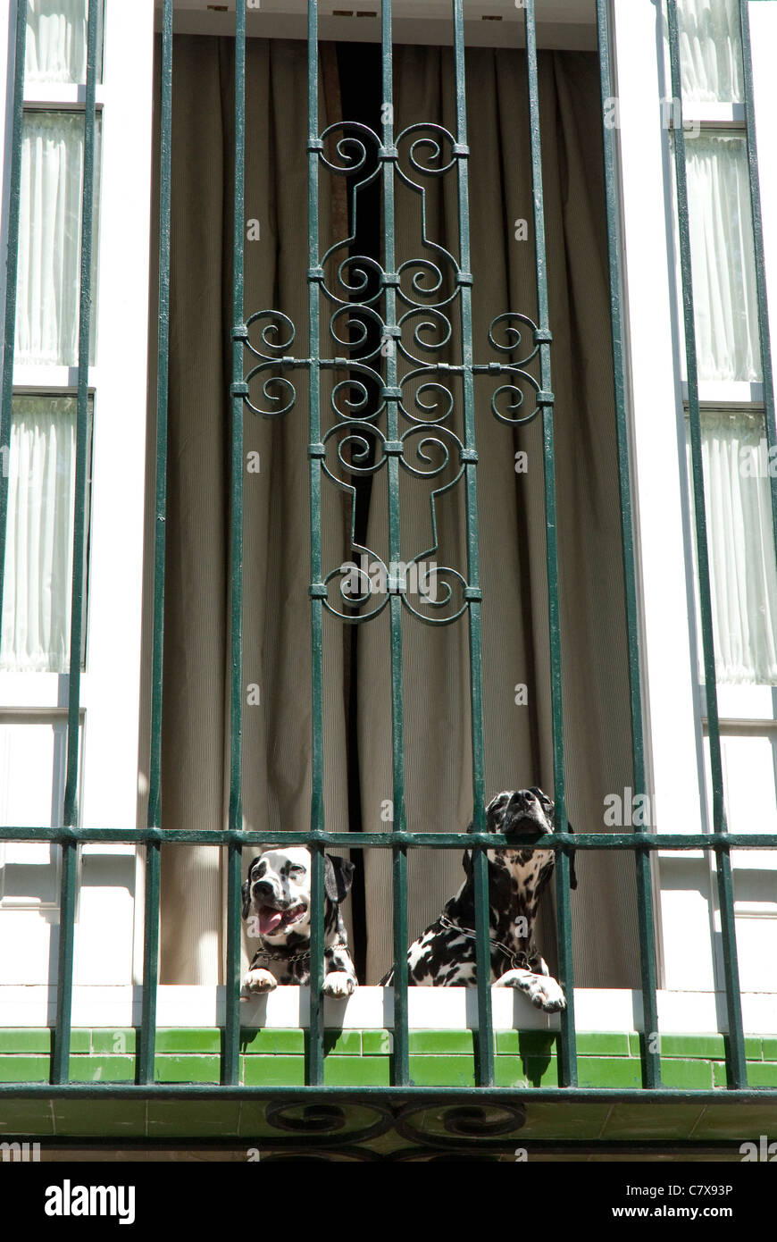 Two Dalmatian Dogs on a Balcony - Stock Image