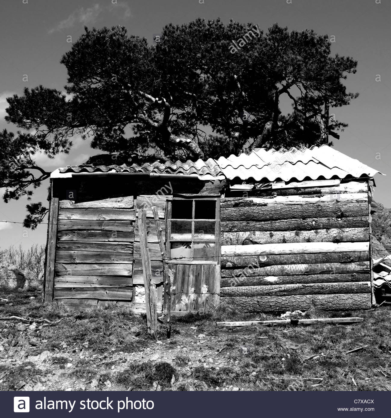 Old abandoned shack with tree in rural setting - Stock Image