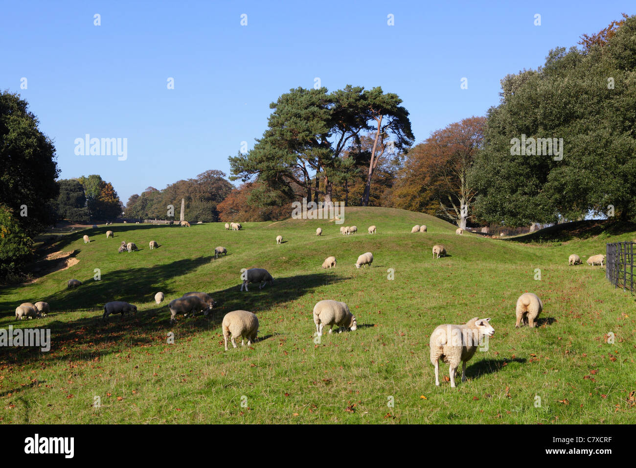Pastoral scene of sheep grazing in English countryside, Winchelsea, East Sussex, England, UK, GB - Stock Image