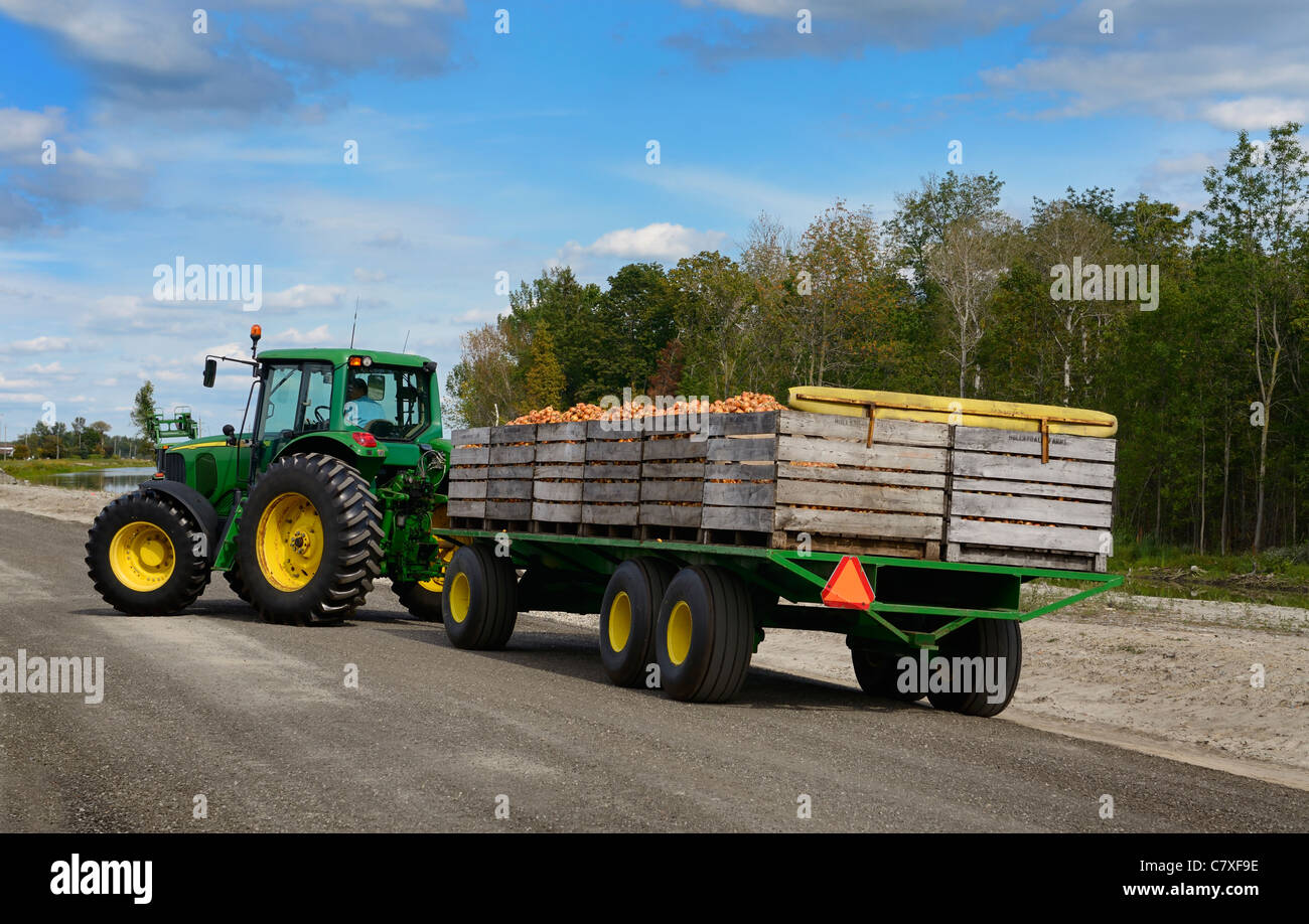 Wood Bins With Freshly Harvested Onions On A Flatbed Trailer Pulled Stock Photo Alamy