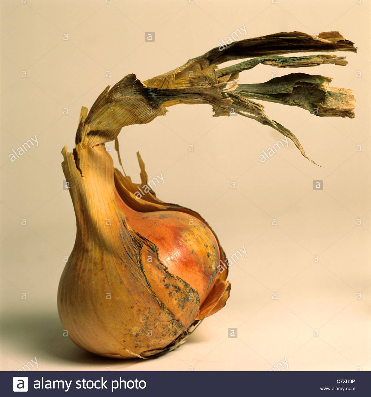 Onion with peeling skin - Stock Image