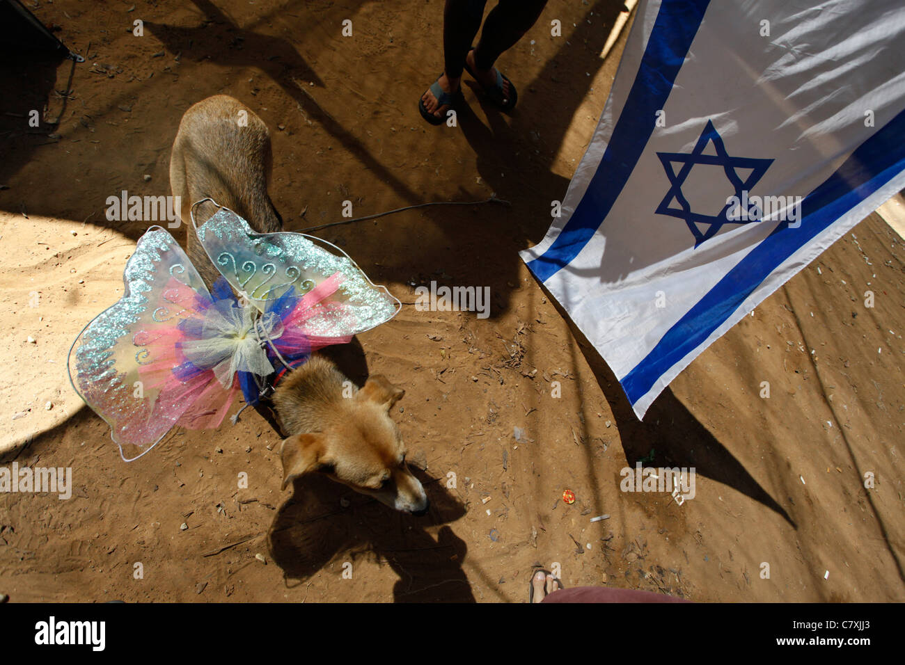 A dog decorated is seen with the Israeli flag during Cost of Living protest in Tel Aviv Israel. The social justice - Stock Image