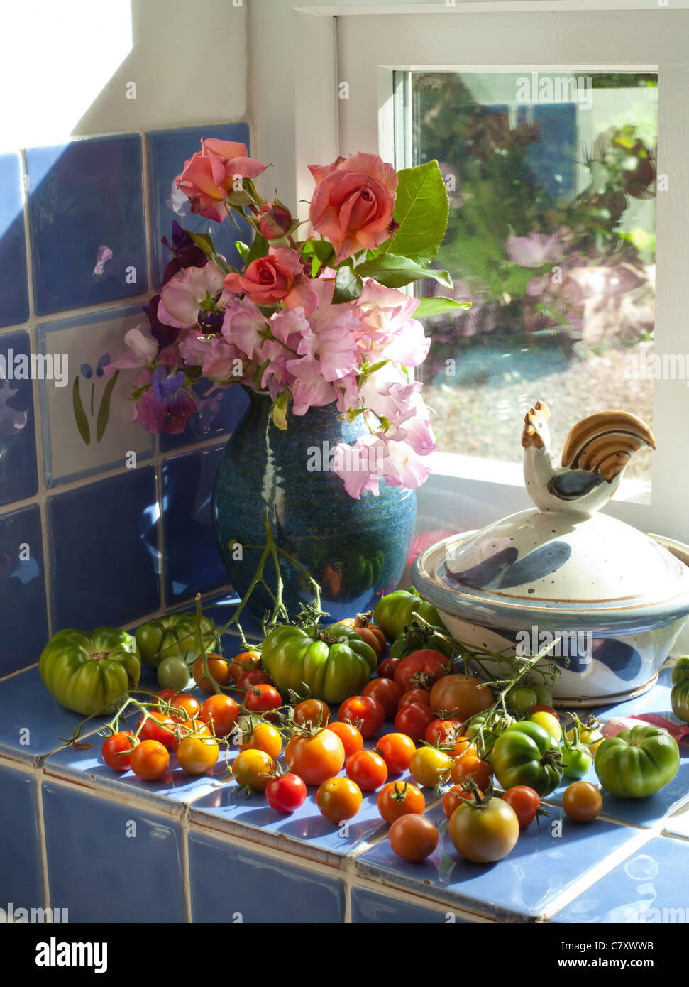 RIPENING TOMATOES AND FLOWERS ON WINDOW SILL IN KITCHEN UK - Stock Image