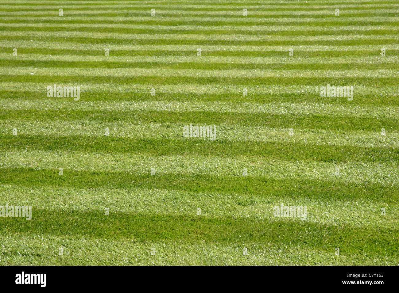 Stripes on perfectly manicured lawn - Stock Image