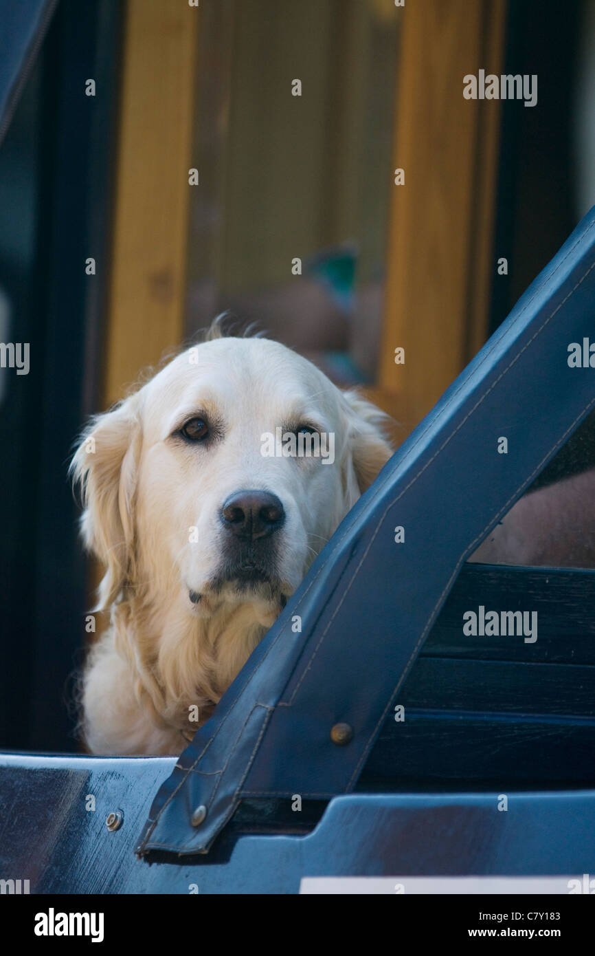 Dog on a canal barge looking out Canis lupus familiaris - Stock Image